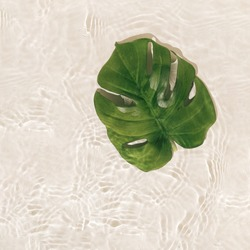 Summer scene with green monstera leaf in water. Tropical un and shadows. Minimal nature background.