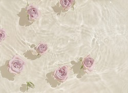 Summer scene with rose flowers in water. Sun and shadows. Minimal nature background.