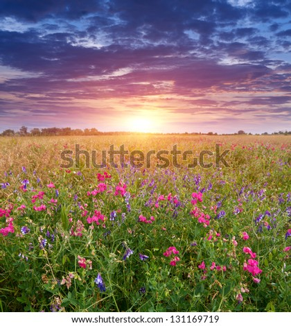 Summer scene with sunset on meadow