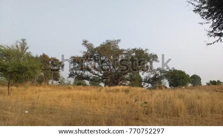 summer season  landscape #770752297