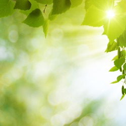 Summer seasonal backgrounds for your design