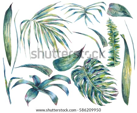 Summer set et of exotic watercolor green tropical leaves, botanical natural collection, isolated illustration