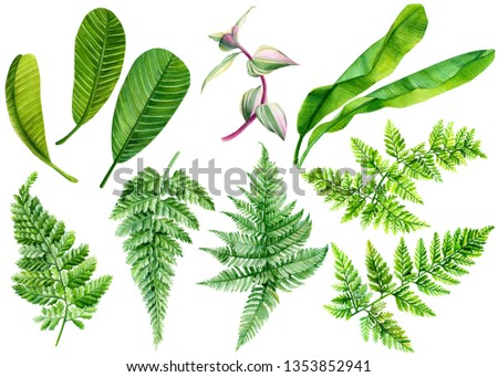 summer set of green leaves of fern, plumeria, banana palm watercolor painting, tropical plant on an isolated white background, botanical illustration