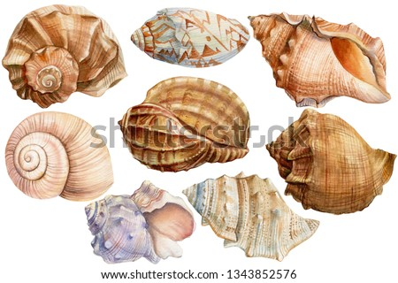 summer set of seashells on an isolated white background, watercolor, hand-drawing, painting