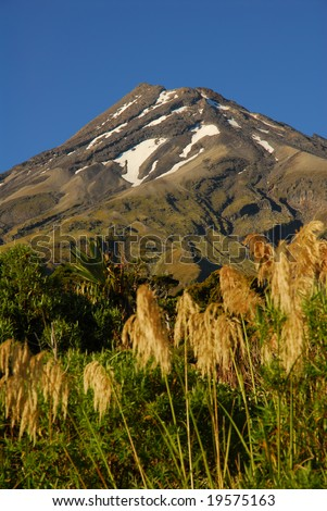 Summer shot of Mount Taranaki in New Zealand with grasses in foreground