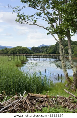 Summer sky reflected in the Lower Lake, (Lough Leane) Killarney, Ireland, with a native alder tree, a patch of water lilies in the morning sunshine and a glimpse of blue mountains in the distance