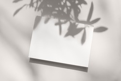 Summer stationery still life scene. Close-up of blank paper, greeting card mock-up. Trendy olive tree branches long shadows. White table background in sunlight. Flat lay, top view.Empty copyspace.