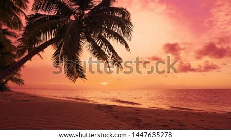 Summer sun sundown on palms beach coast seascape. The best sunset in the world. Atlantic Ocean palm trees beach sundown sea. Sky and waves of Caribbean sea. Amazing summer nature sundown background.