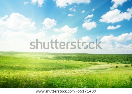 summer sunny day and field of flowers - stock photo