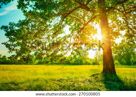 Summer Sunny Forest Trees And Green Grass. Nature Wood Sunlight Background. Instant Toned Image #270100805