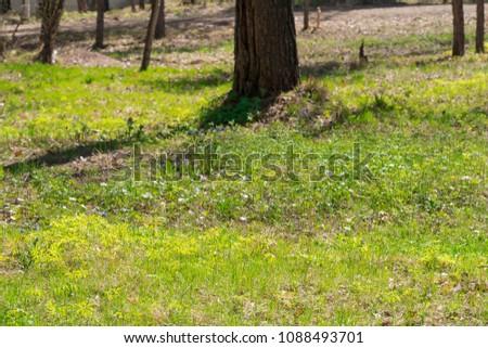Summer sunny grass #1088493701