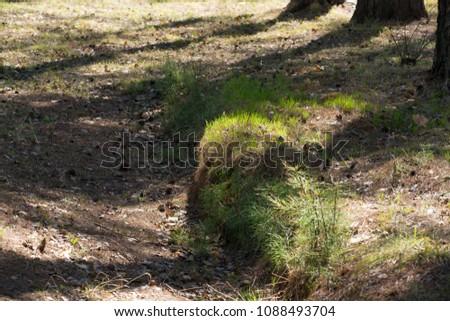 Summer sunny grass #1088493704