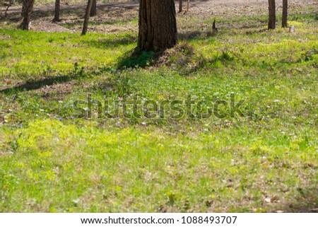Summer sunny grass #1088493707