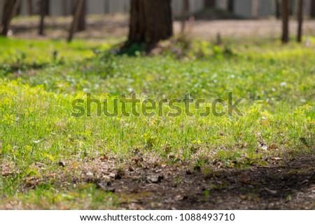 Summer sunny grass #1088493710