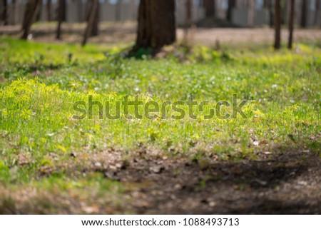 Summer sunny grass #1088493713