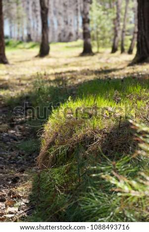 Summer sunny grass #1088493716
