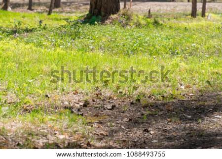 Summer sunny grass #1088493755