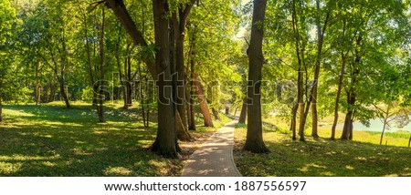 Summer sunny landscape with stone tile road passing between the old trees in shady park Сток-фото ©