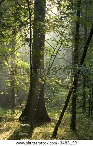 Summer sunny morning in old forest