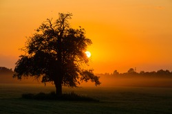 summer sunset and lonley tree in the middle of field