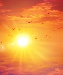 Summer sunset. Birds flight ahead the setting sun in a cloudy sky background