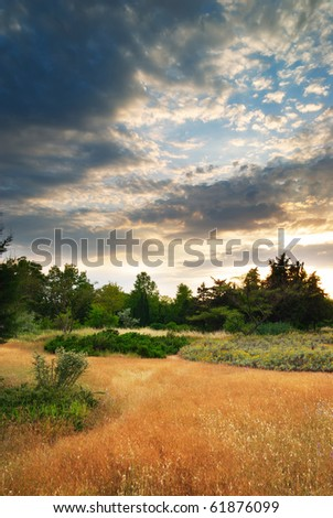 Summer sunset  in forest. Nature composition.