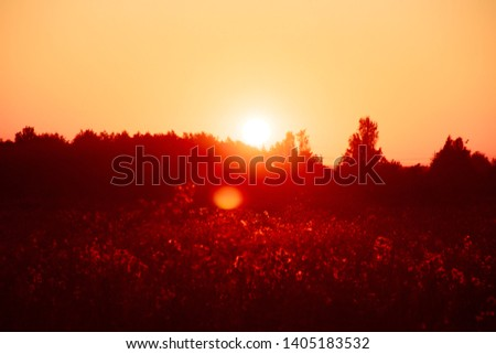 Summer sunset in the field. Evening field. Field with grass and wildflowers. Ray of sunshine
