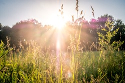 summer sunset on green meadow and sunbeams through grass in the evening. Scenery landscape of bright sunrays over green field. Summer nature. Natural sunlight.