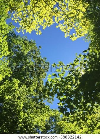 Summer Sunshine Leaves #588322142