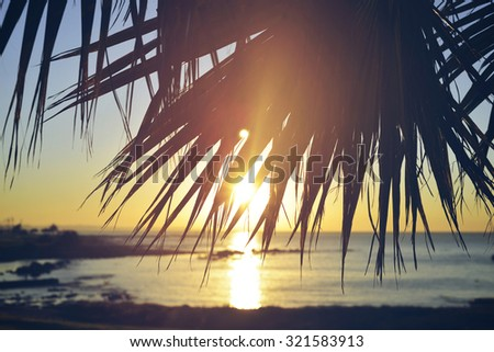 Summer time paradise sunset beach background with palm tree leaf and vintage filter effect.
