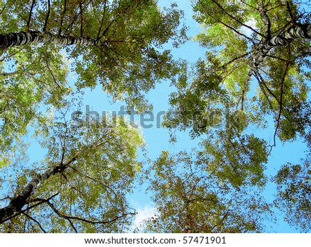 summer trees by blue sunny sky background
