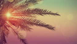 Summer tropical background with palms, sky and sunset.