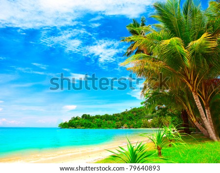 Summer tropical beach with coconut palm trees under blue sky. Exotic luxury vacations scene.