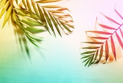 Summer tropical palm leaves flat lay background with a blank space, stylized image