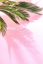 Summer tropical travel concept, the sun is shining brigtly on a bunch of palm leaves, palm leaves shadow is laying on pastel pink wall, composition with a space for a text