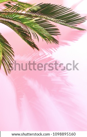 Summer tropical travel concept, the sun is shining brigtly on a bunch of palm leaves, palm leaves shadow is laying on pastel pink wall, composition with a space for a text - Shutterstock ID 1098895160