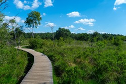 Summer vacation destination in Europe, green Kempen forest and meadows in North Brabant, Netherlands in sunny day, nature background