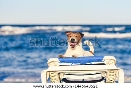 Summer vacation holiday concept with happy contented dog playing at sea beach gets on tanning bed #1446648521