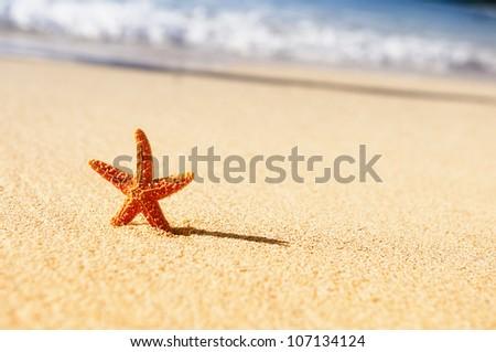 Summer vacations - starfish on sunset sea sand beach