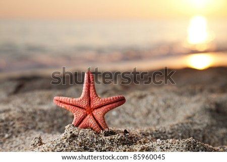 Summer vacations - starfish on sunset sea sand beach