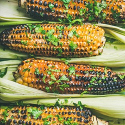 Summer vegan dinner or snack. Flat-lay of grilled sweet corn with smoked sea salt and cilantro over blue background, top view, square crop, close-up. Vegetarian, healthy, alkaline diet concept