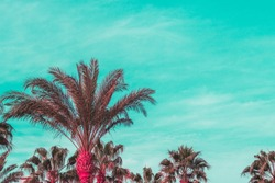 Summer vibes. Tropical vibrant palm tree at beach.