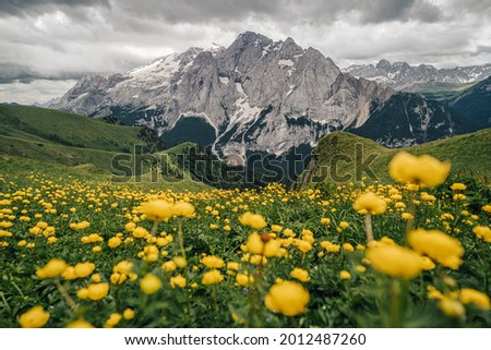 Summer view of Marmolada (Punta Penia), the highest peak in Dolomites, Italy. Alpine landscape of Dolomiti with a view of a glacier on Marmolada and beautiful green meadow with yellow flowers. Zdjęcia stock ©