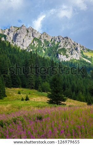 Summer view of the Tatra Mountains, Poland.