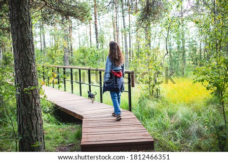 """Summer view of wooden walkway on the territory of Sestroretsk swamp, ecological trail path - route walkways laid in the swamp, reserve """"Sestroretsk swamp"""", Kurortny District, Saint-Petersburg, Russia"""