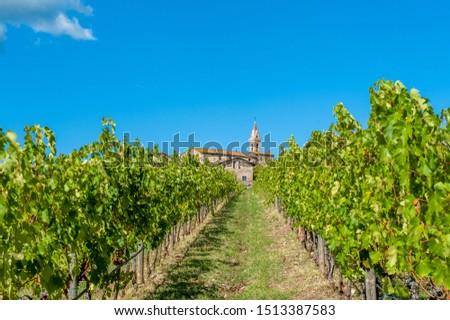 summer vineyards in the Chianti area, San Gusmè, castelnuovo, Berardenga, tuscany, italy  #1513387583