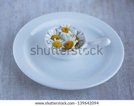 summer wild flower camomile in the small plate on the flat plate