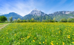Summer. Wildflowers in the meadow. Mountains in the background. Swiss meadows.