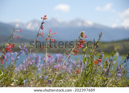 Summer Wildflowers in the Rocky Mountains