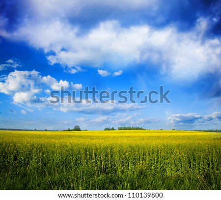 Summer Yellow field background, Lithuania